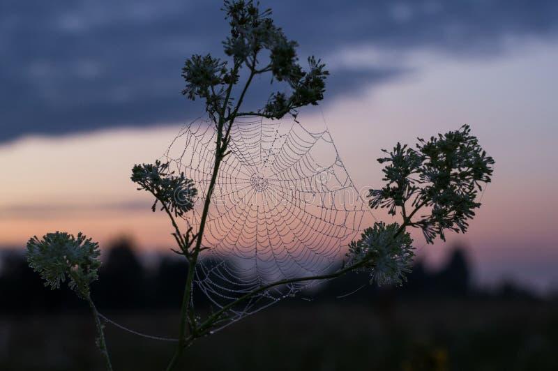 在日出的美好的蜘蛛网 与露滴的蜘蛛网 免版税库存图片