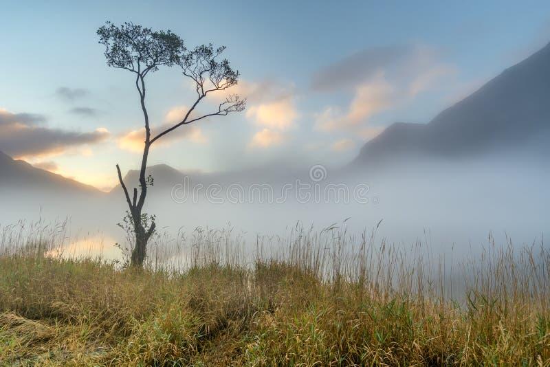 在日出的Buttermere孤立树 免版税图库摄影
