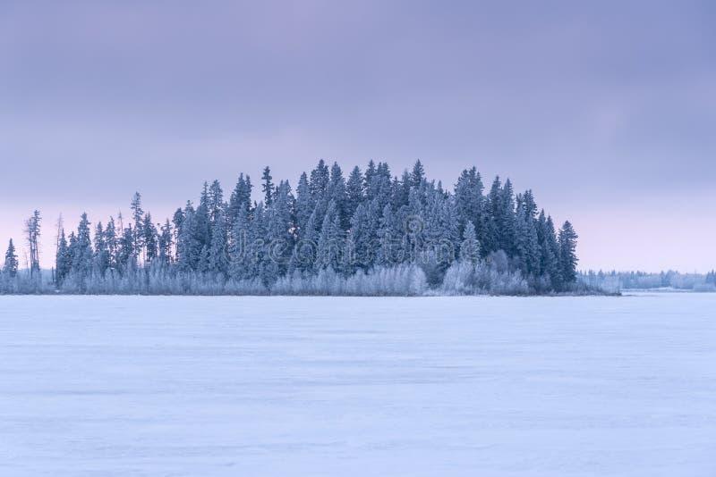 在日出,麋鹿岛国家公园,加拿大的积雪的常青树 库存照片