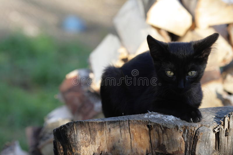 在日志的两只猫 免版税库存图片