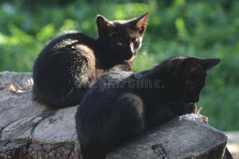 在日志的两只猫 库存照片