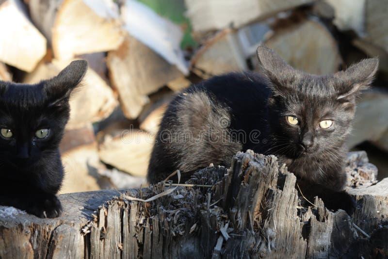 在日志的两只猫 库存图片