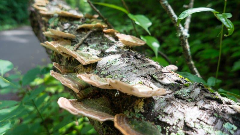 在日志的真菌 库存照片
