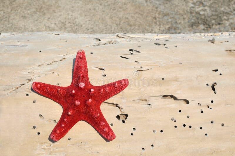 在日志的红海星 免版税库存照片