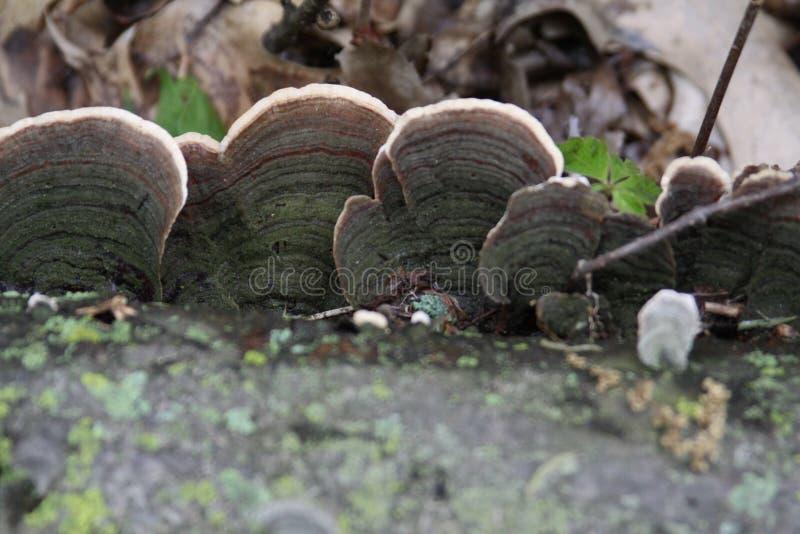 在日志2019年II的真菌 库存图片