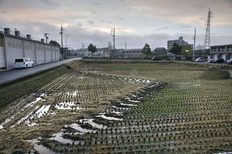 在日本城市的郊外的米领域 免版税库存照片