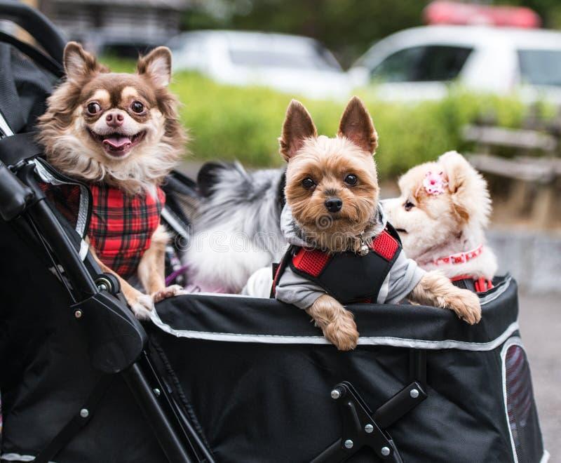 在日本年轻夫妇的新的趋向在婴儿车采取爱犬和旅行与他们所有  免版税库存照片