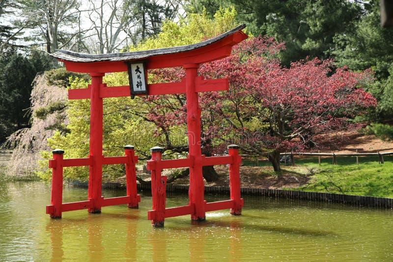 在日本庭院的佐仓开花在布鲁克林植物园里 免版税图库摄影