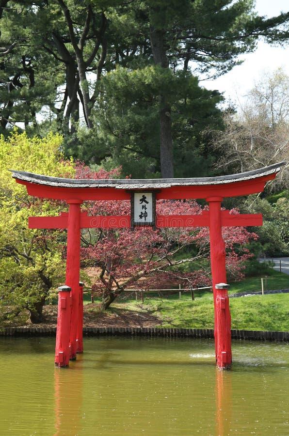 在日本庭院的佐仓开花在布鲁克林植物园里 免版税库存图片