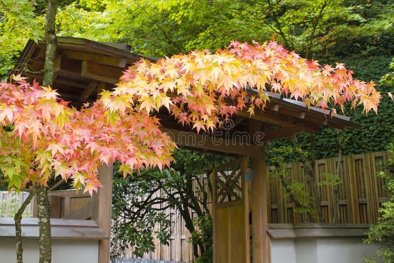 在日本庭院的秋天颜色 库存图片