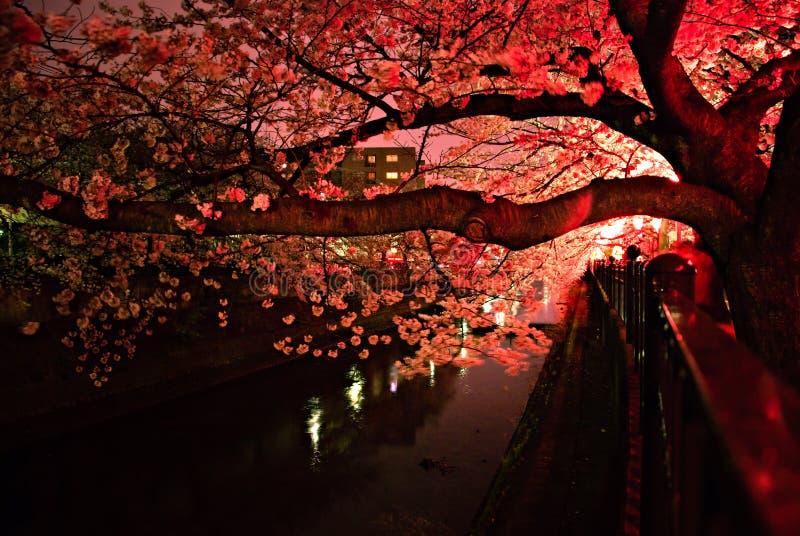 在日本的樱花月 免版税库存图片