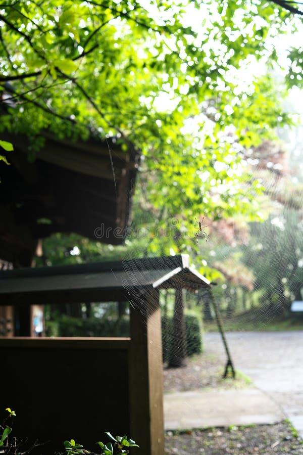 在日本老房子门附近的一spiderweb 免版税图库摄影