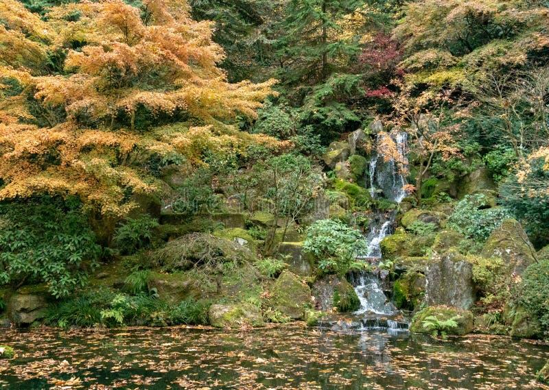在日本茶园里面的瀑布 免版税库存图片