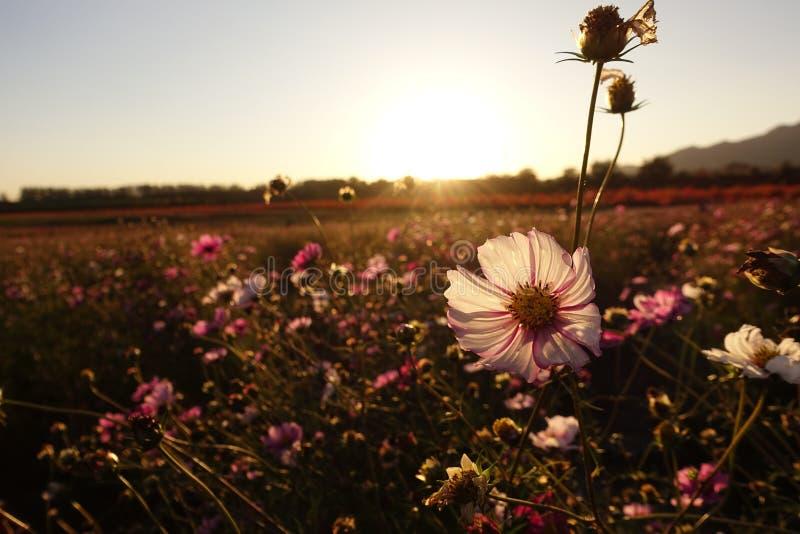 在日落下的花 库存照片