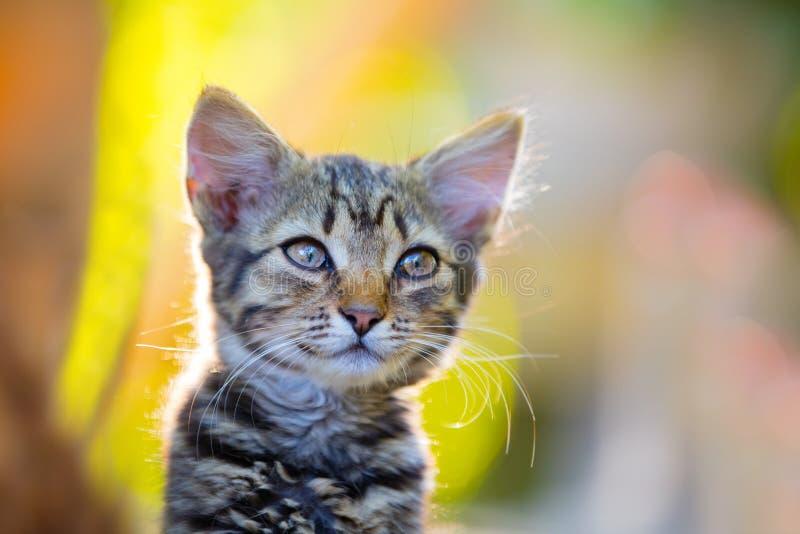 在日落光的小猫 免版税库存图片