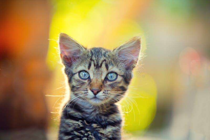 在日落光的小的小猫 免版税库存图片