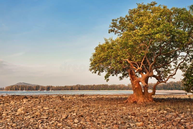 在日落光的石头海滩 免版税库存照片