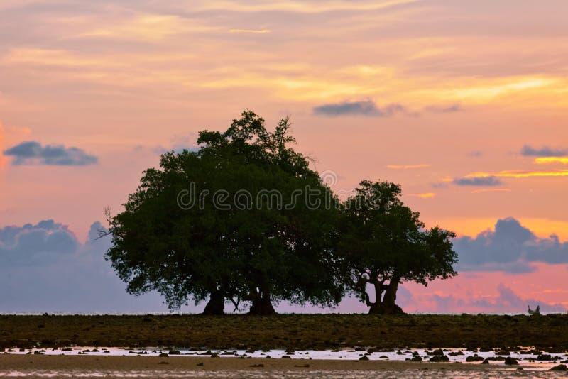 在日落光的石头海滩 图库摄影
