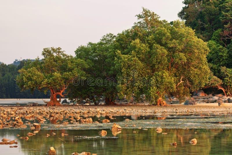 在日落光的石头海滩 免版税图库摄影