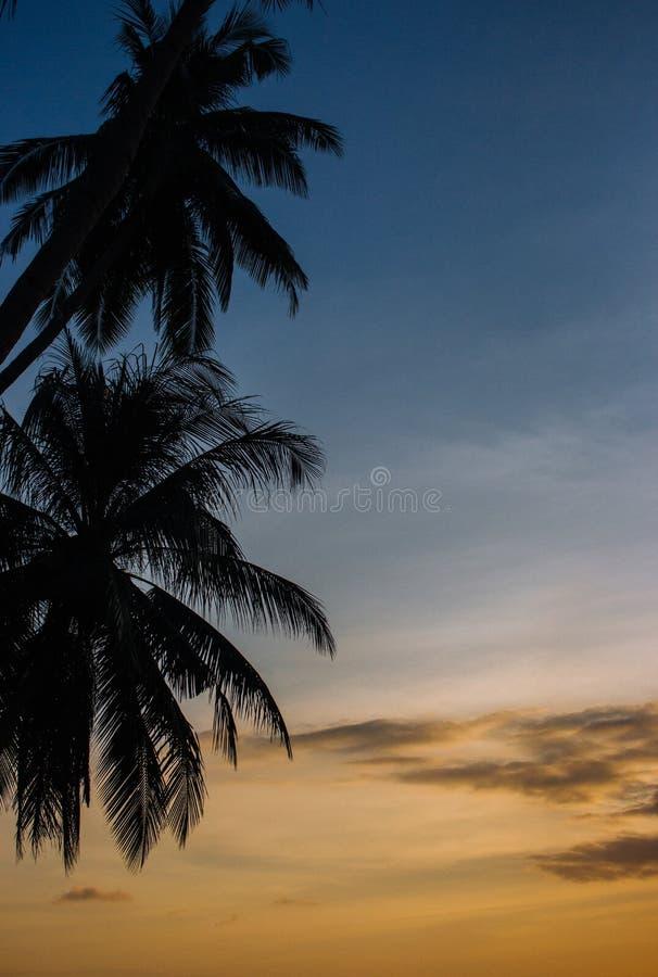 在日落天空背景的棕榈树剪影 与椰子剪影的五颜六色的平衡的天空 在海滩的风景微明 免版税图库摄影