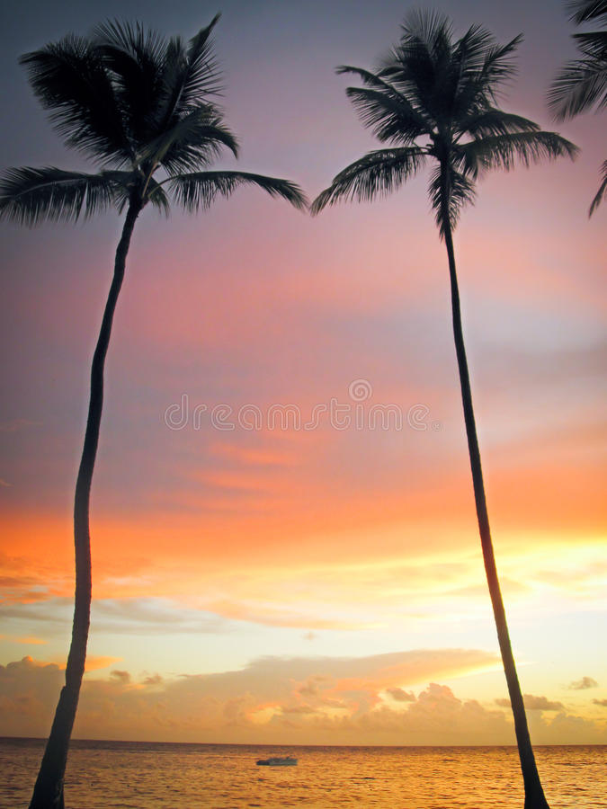 在日落天空背景的高棕榈树 免版税库存照片