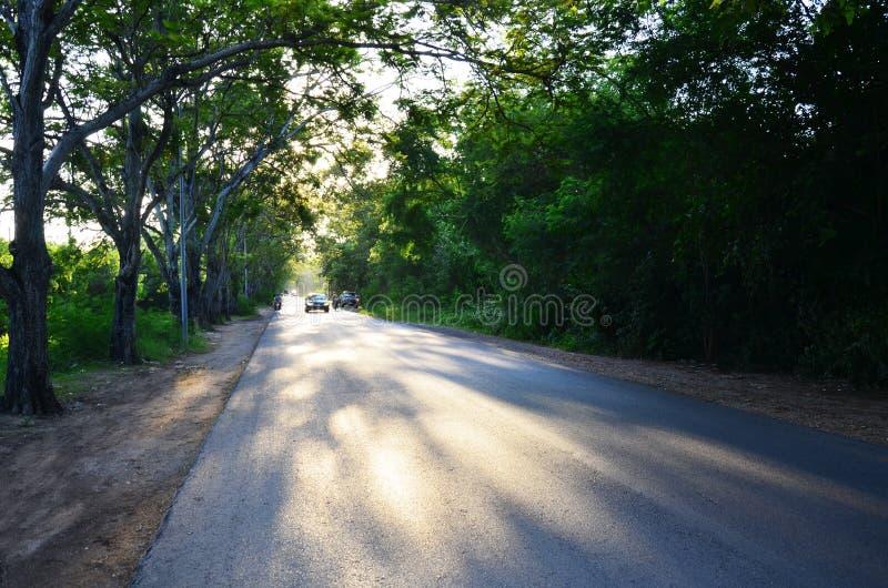 在日落时间的树隧道自然路 库存图片