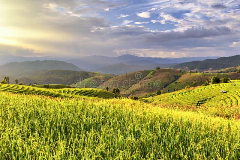 在日落时间, Pa的美好的大阳台米领域发出当当声piang小山tirbe村庄, Chiangmai,泰国 免版税库存照片