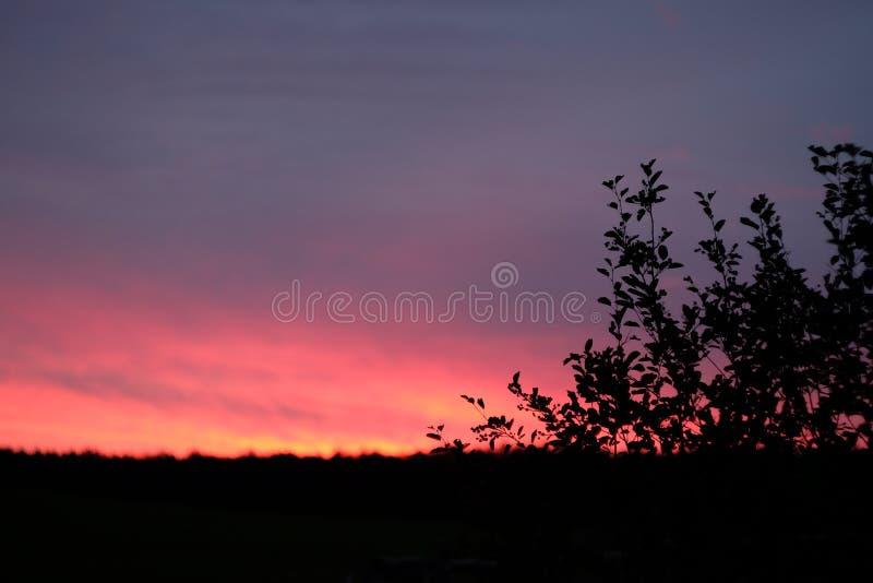 在日落期间的树剪影 免版税库存图片