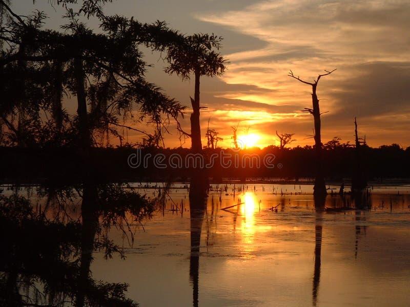 在日落沼泽 库存图片