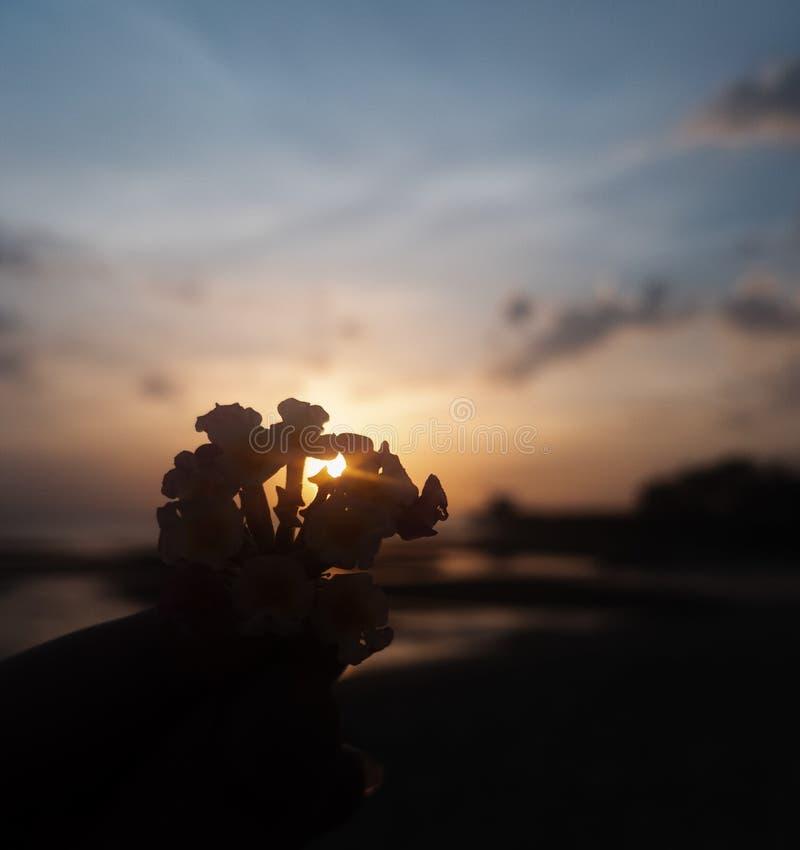 在日落的一朵花 免版税库存照片