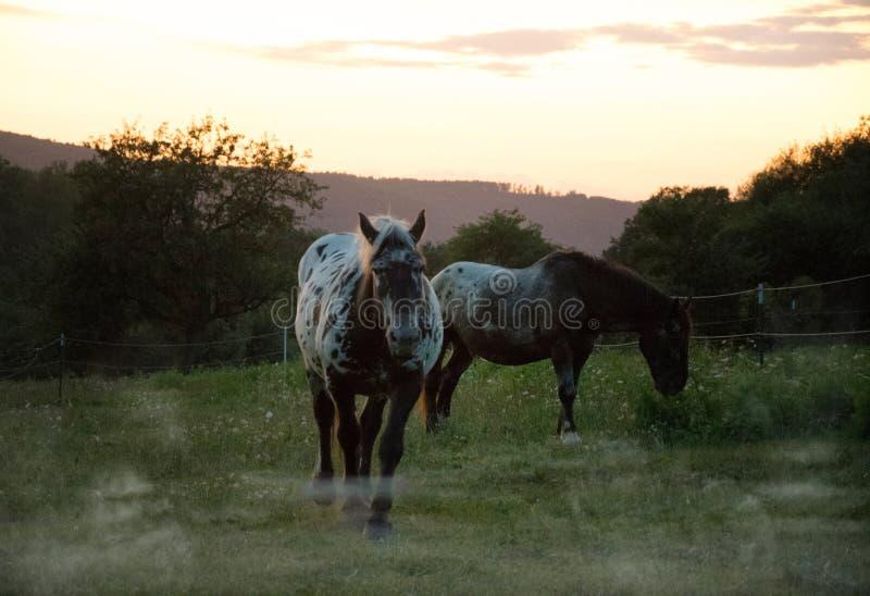 在日落的两匹马 免版税库存图片