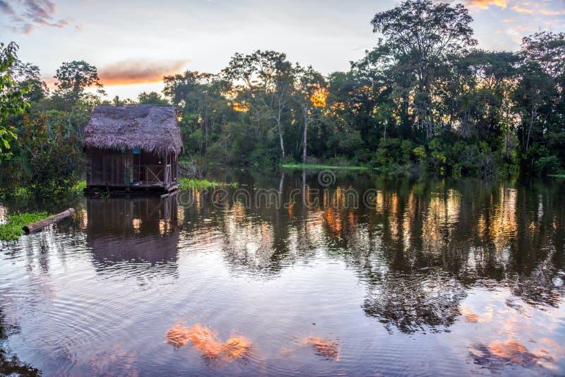 在日落的亚马逊雨林 库存照片