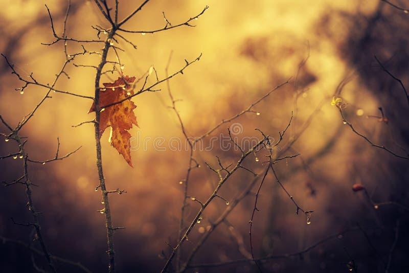 在日落的偏僻的秋天叶子 库存照片
