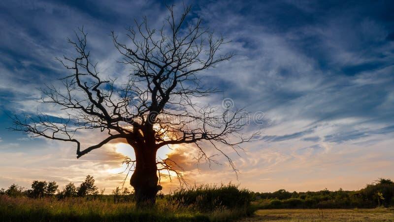 在日落的停止的结构树 库存图片