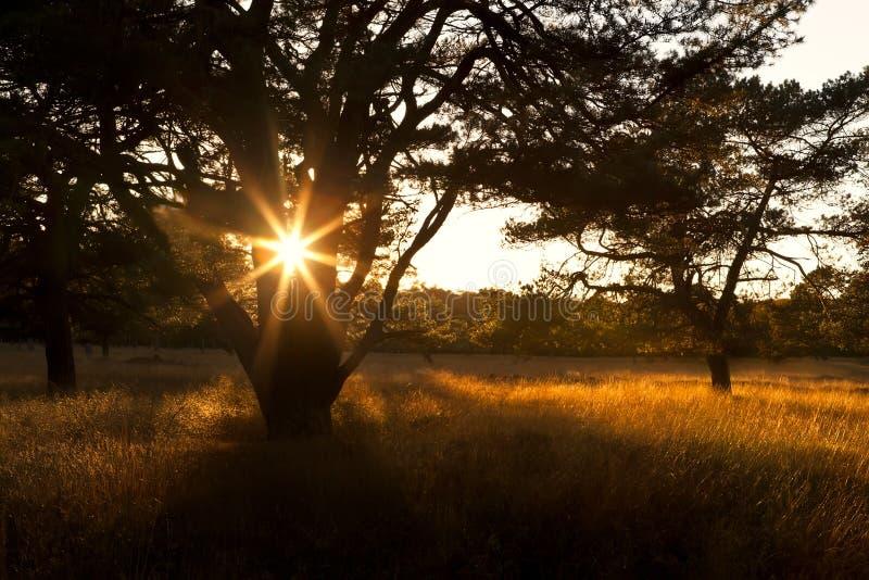 在日落的光束通过结构树 库存图片