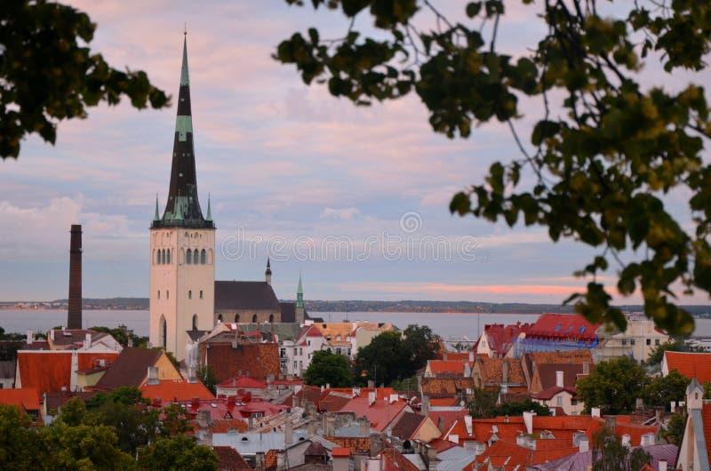 在日落的塔林爱沙尼亚老镇屋顶 库存照片