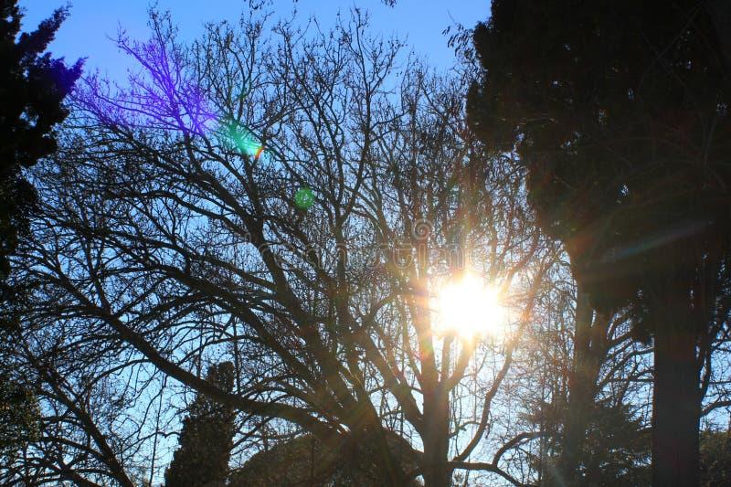 在日落的大不同的树 免版税库存照片