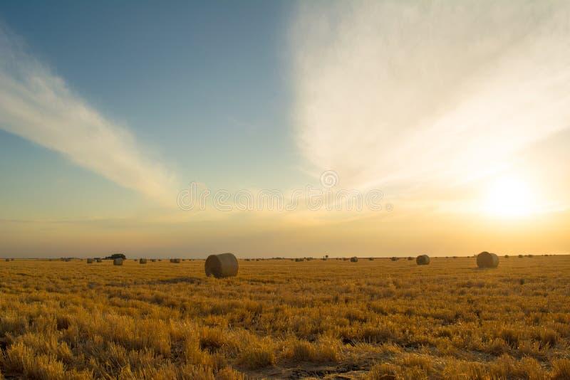 在日落的大麦大包 免版税库存照片
