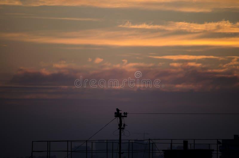 在日落的孤独的鸟 免版税库存照片