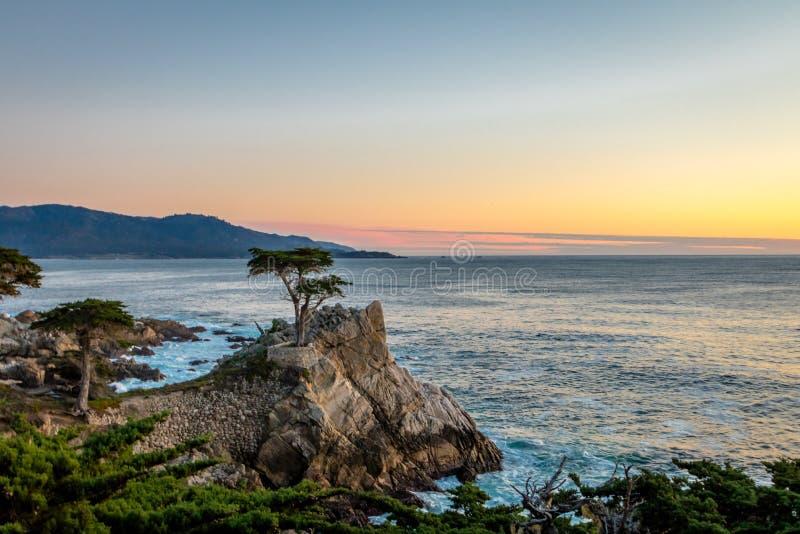 在日落的孤立柏树视图沿著名17英里驱动-蒙特里,加利福尼亚,美国 库存图片