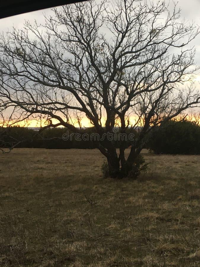 在日落的孤立树剪影 免版税库存图片