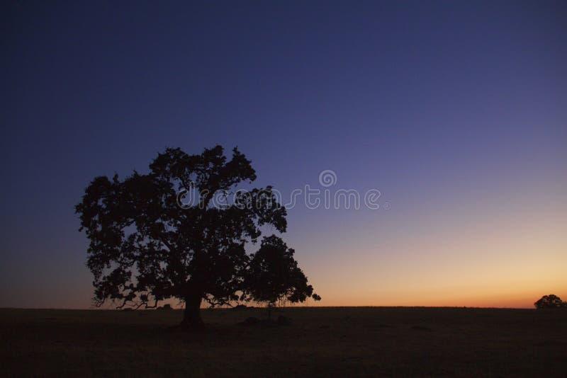 在日落的孤立谷木 免版税库存照片