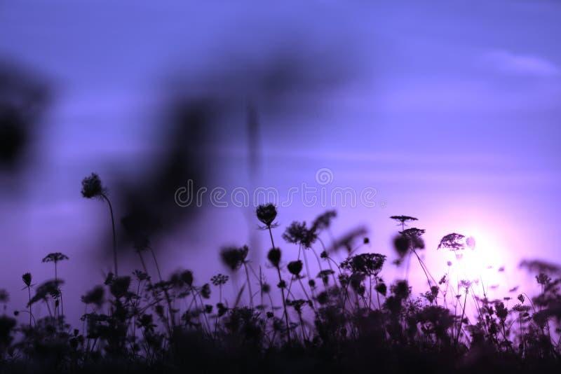 在日落的小花 免版税库存照片