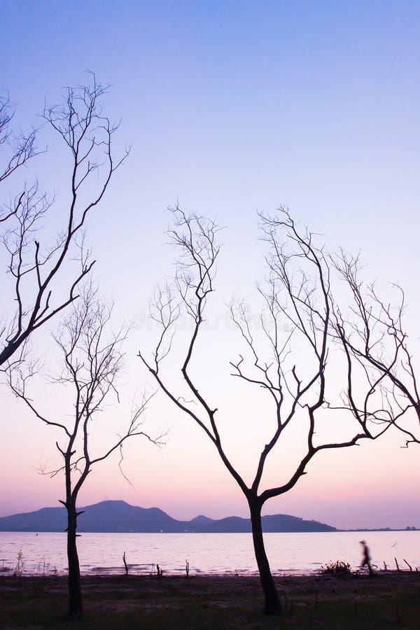 在日落的平安的湖边,走在的未认出的男性被排行不生叶的树干 抽象树叉摇摆树  免版税库存照片