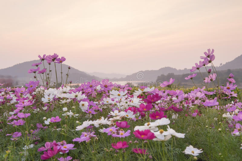 在日落的春天风景 图库摄影