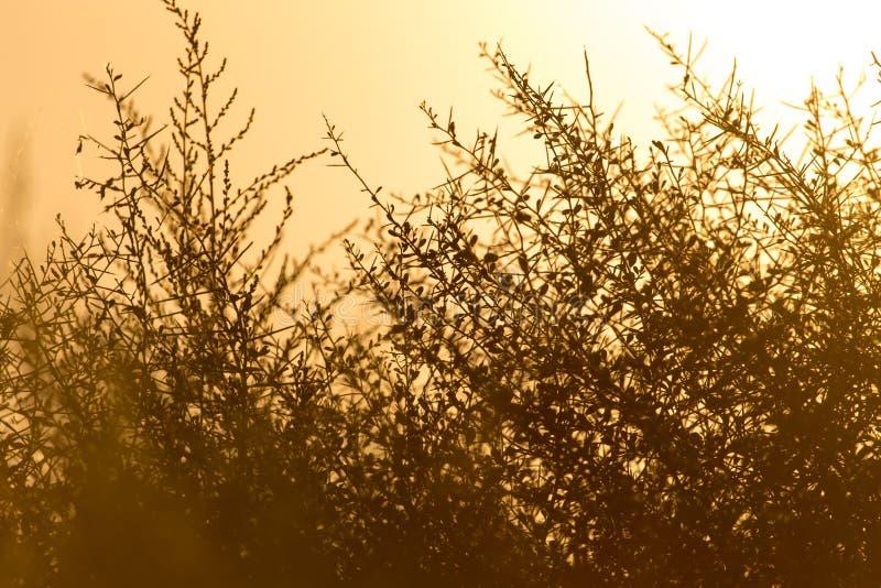在日落的有刺的草在公园 图库摄影