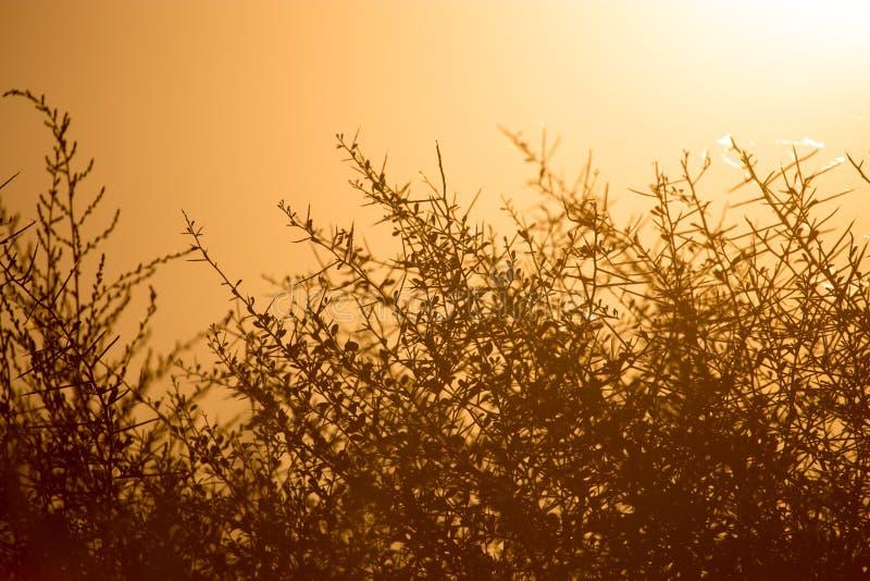 在日落的有刺的草在公园 免版税库存照片