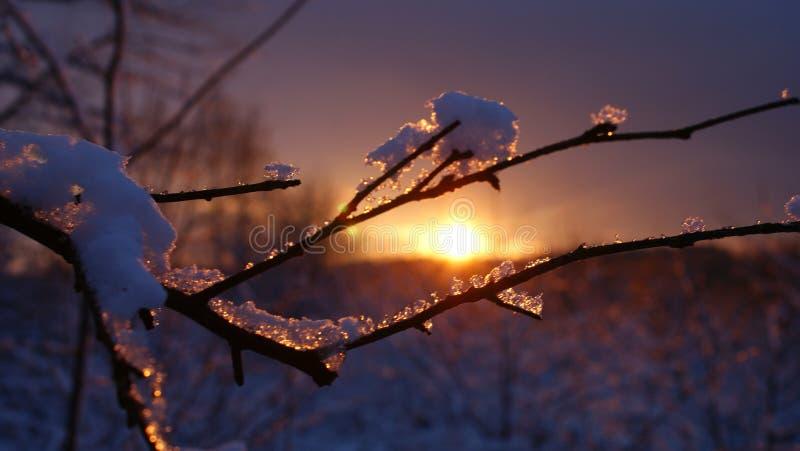 在日落的枝杈 免版税库存照片