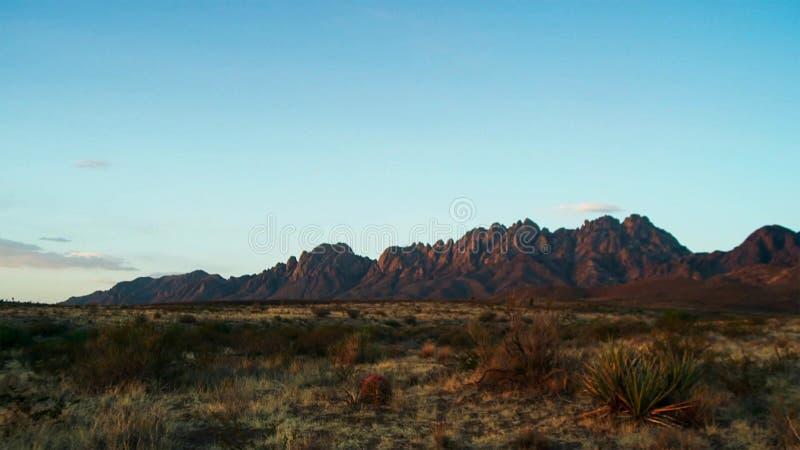 在日落的柱仙人掌在迷信山前面 在菲尼斯附近的Sonoran沙漠 图库摄影