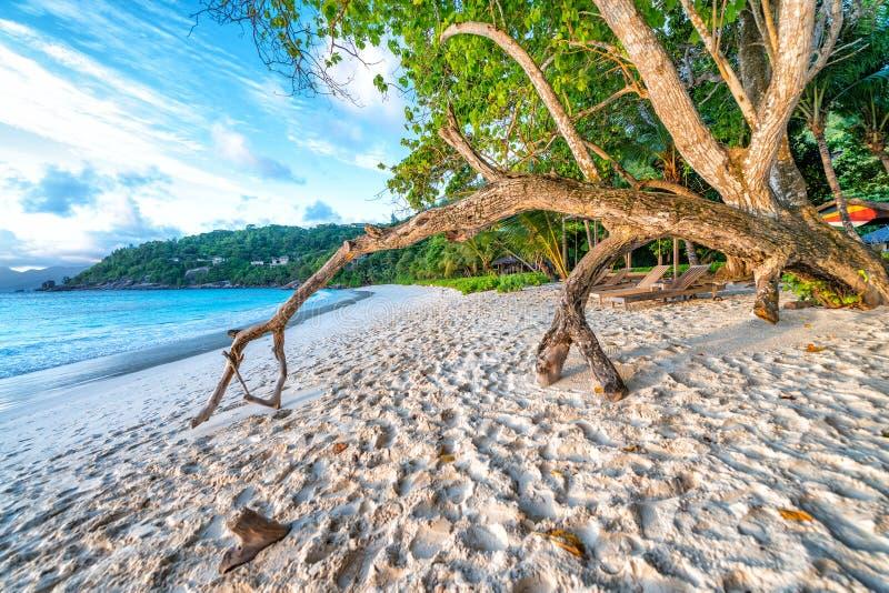 在日落的树干在一个美丽的热带海滩 免版税库存照片
